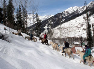 Horse Riding In Manali